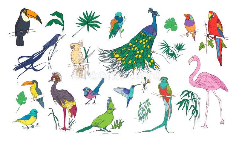 Coleção de pássaros exóticos tropicais bonitos com plumagem e as folhas coloridas brilhantes das plantas da selva isoladas no bra ilustração do vetor