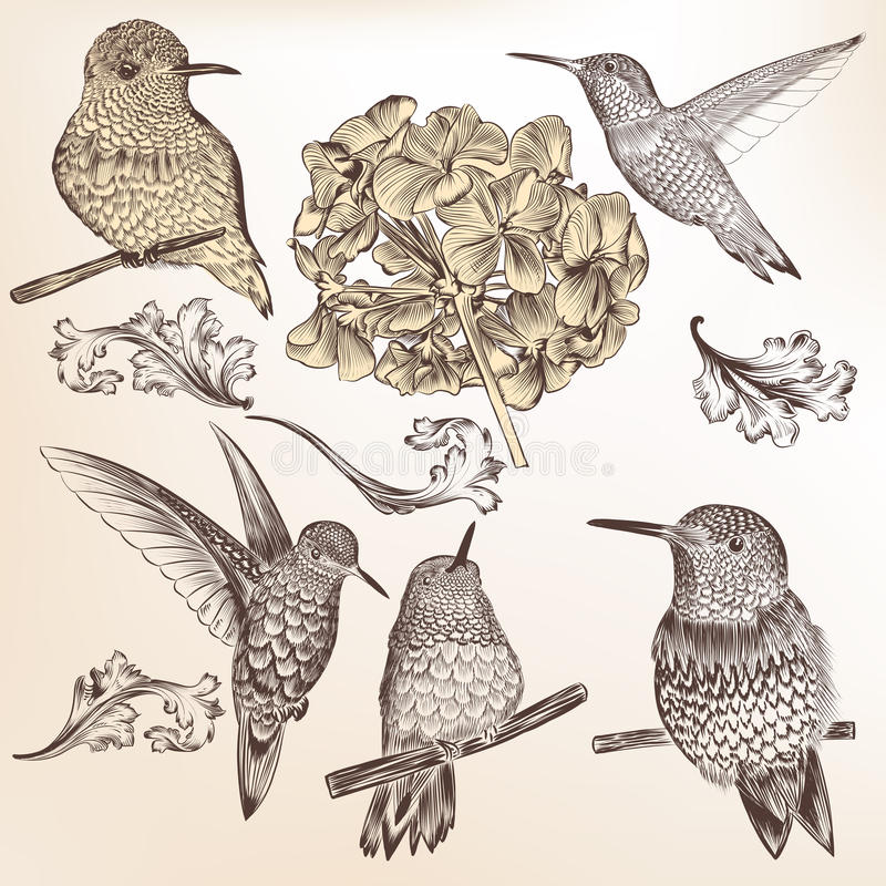 Coleção de pássaros tirados mão do zumbido do vetor para o projeto ilustração stock