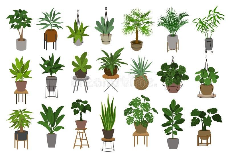 Coleção de plantas de jardim interno diferentes da casa da decoração em uns potenciômetros e em uns suportes ilustração royalty free