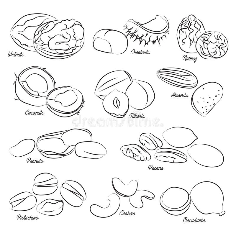 Coleção de porcas diferentes ilustração do vetor