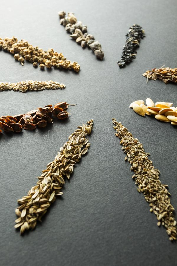 Cole??o de sementes org?nicas para plantar no solo: ruibarbo, alface, beterrabas, espinafres, cebola, aneto, mel?o, cenoura, erva imagens de stock royalty free