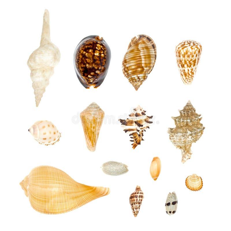 Coleção de Shell do mar ajustada no fundo branco imagens de stock royalty free