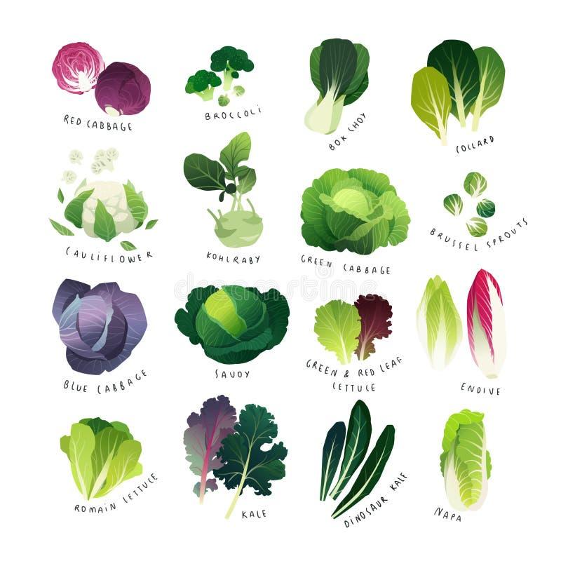 Coleção de vários tipos da couve e de verdes frondosos comuns ilustração do vetor