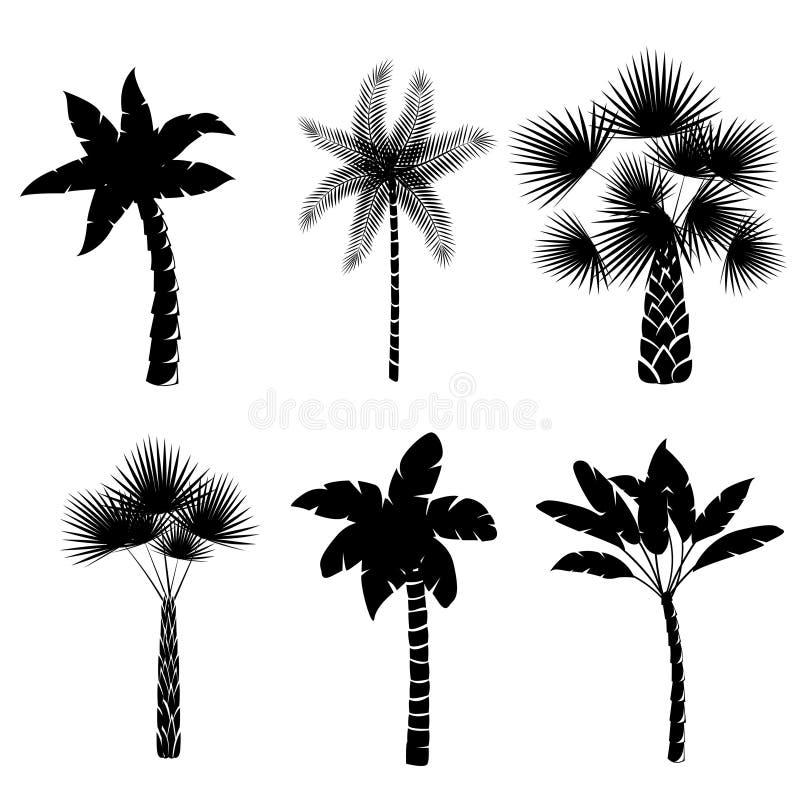 Coleção decorativa das palmeiras ilustração royalty free