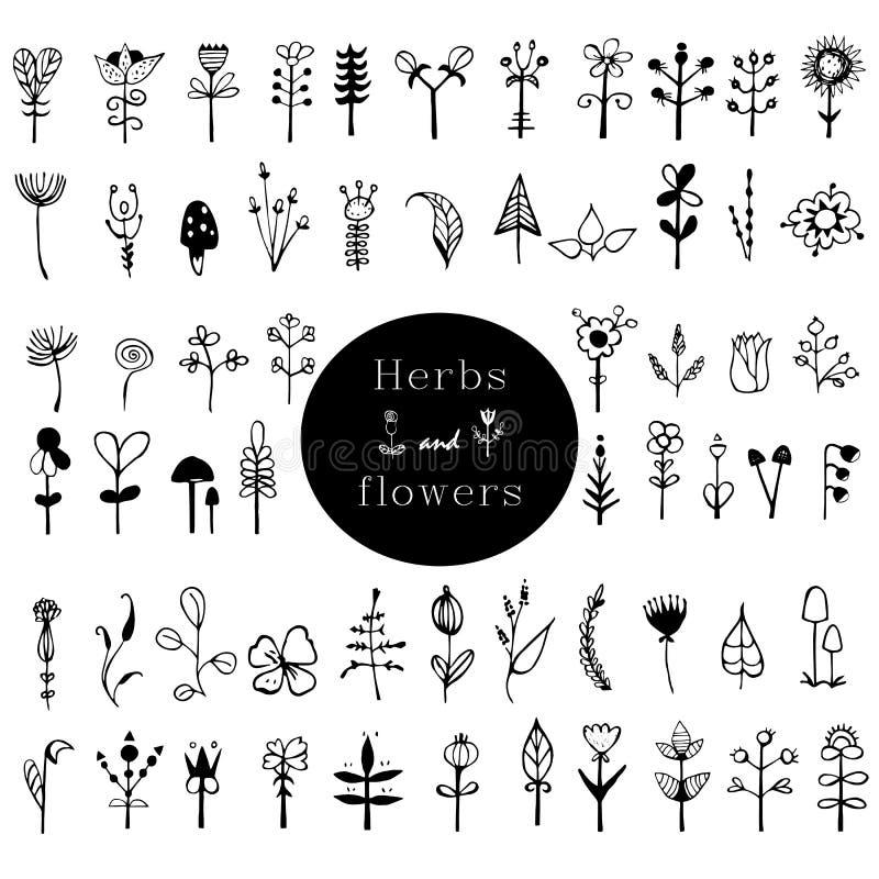 Coleção decorativa rústica das plantas e das flores Cartão preto e branco com flores Fundo romântico para página da web, casament ilustração royalty free