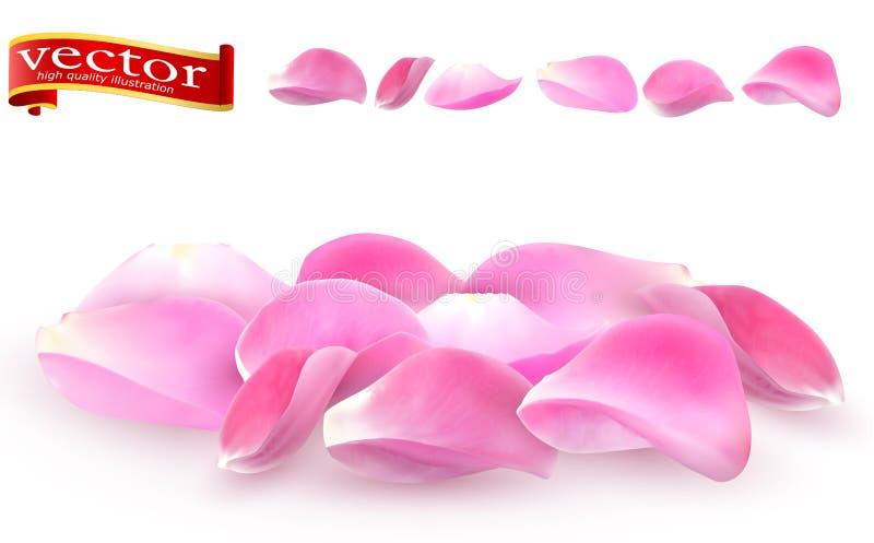 Coleção do close-up cor-de-rosa das pétalas cor-de-rosa no fundo branco Detalhe alto do vetor cor-de-rosa das pétalas cor-de-rosa ilustração stock