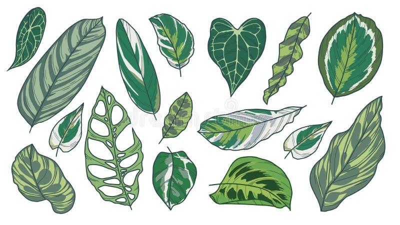 A coleção do desenho da arte do vetor do houseplant exótico popular diferente sae como a planta da oração, Calathea, Pothos, Mara ilustração stock