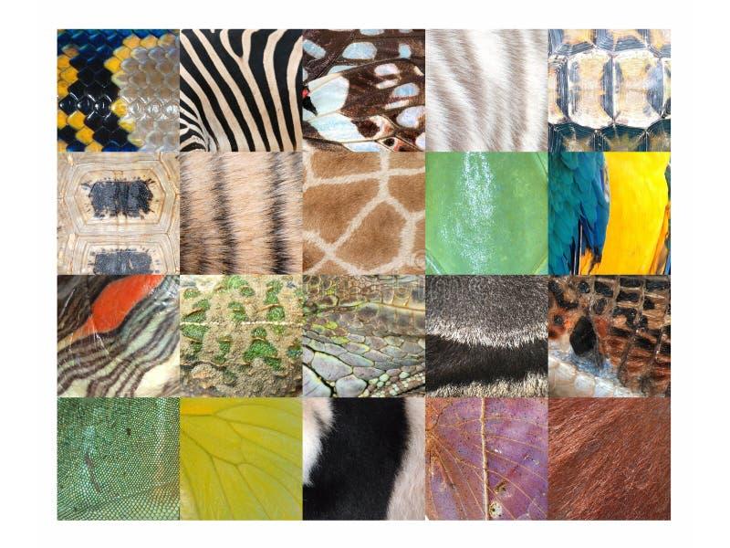 Coleção do detalhe do teste padrão da pele da pele animal fotos de stock royalty free