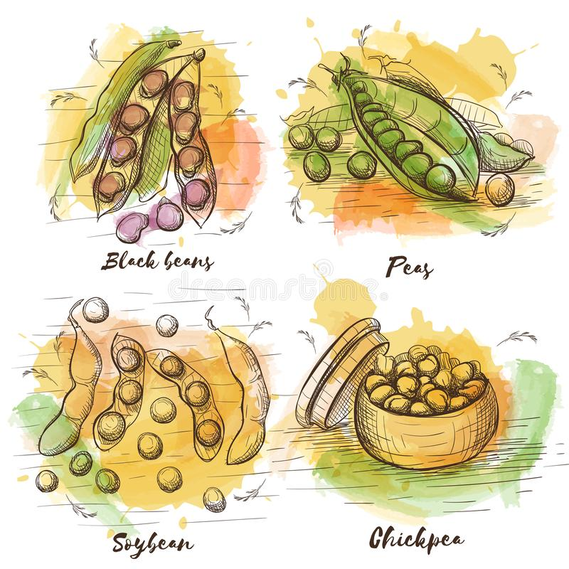 Coleção do esboço do vetor com os feijões para seu projeto Alimento saudável Feijões pretos, ervilhas, grão-de-bico e feijão de s ilustração royalty free