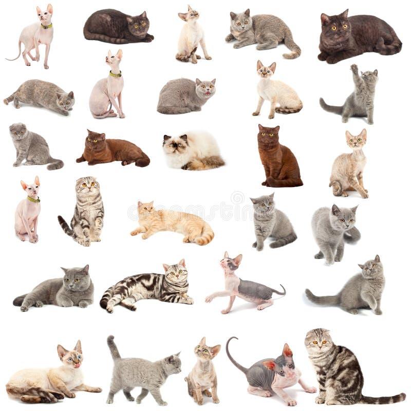 Coleção do gatos foto de stock royalty free