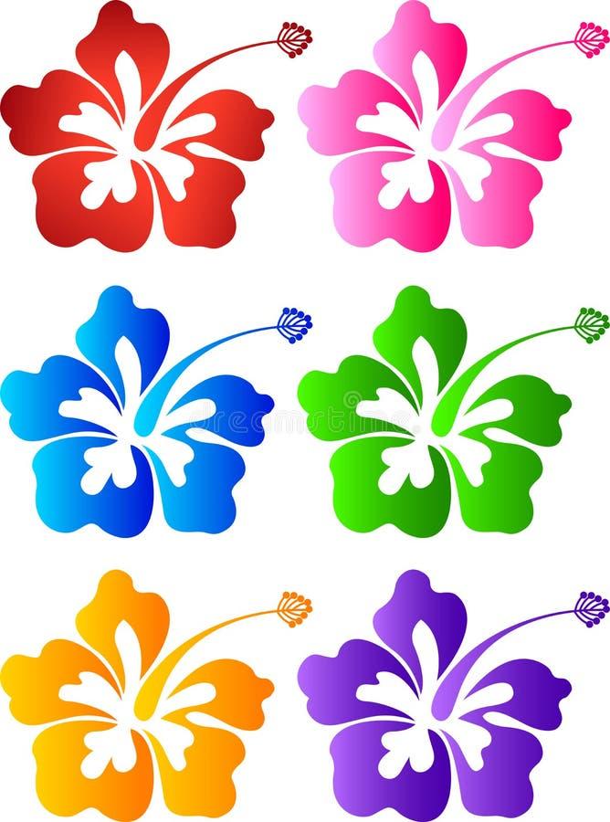 Coleção do hibiscus ilustração stock