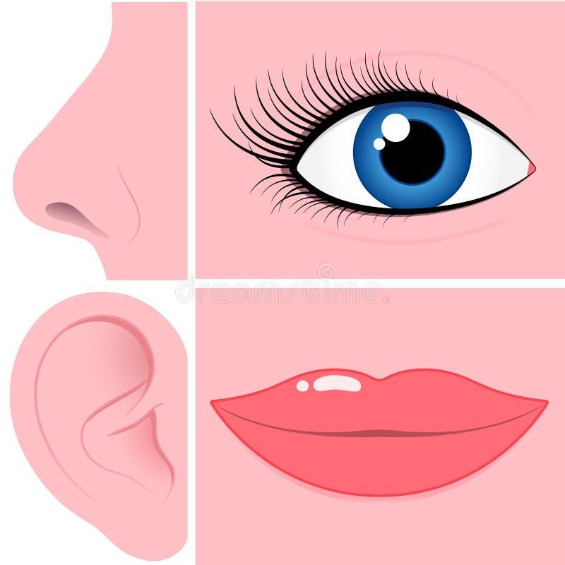 Coleção do nariz, do olho, da orelha e da boca ilustração royalty free