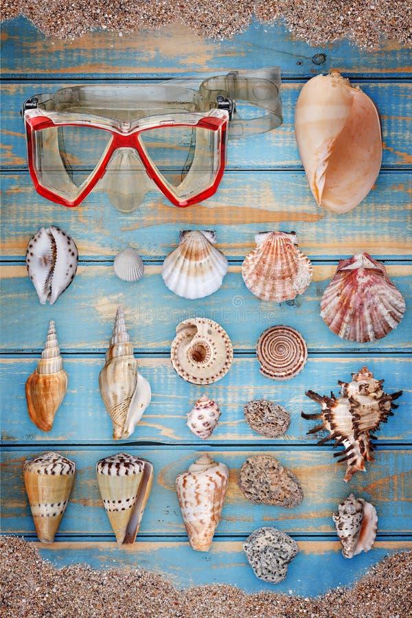 Coleção do Seashell foto de stock