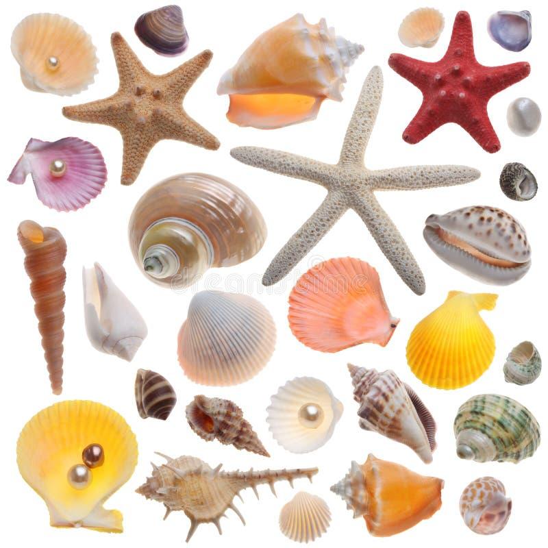 Coleção do Seashell isolada fotos de stock royalty free