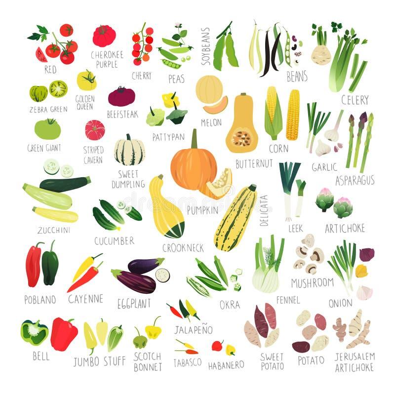 Coleção do vegetal do clipart ilustração stock