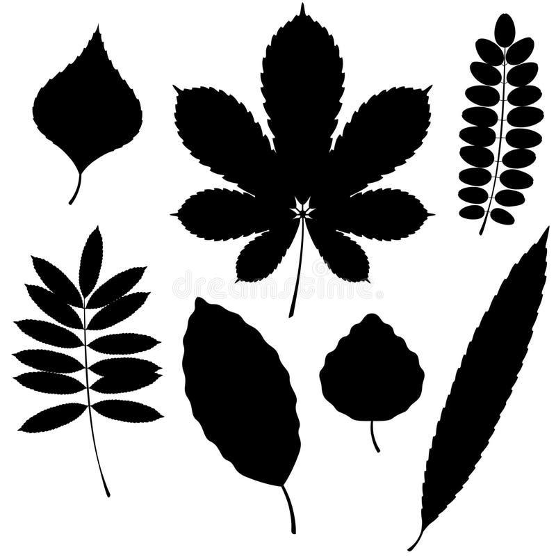 Coleção do vetor das silhuetas da folha isoladas sobre ilustração royalty free