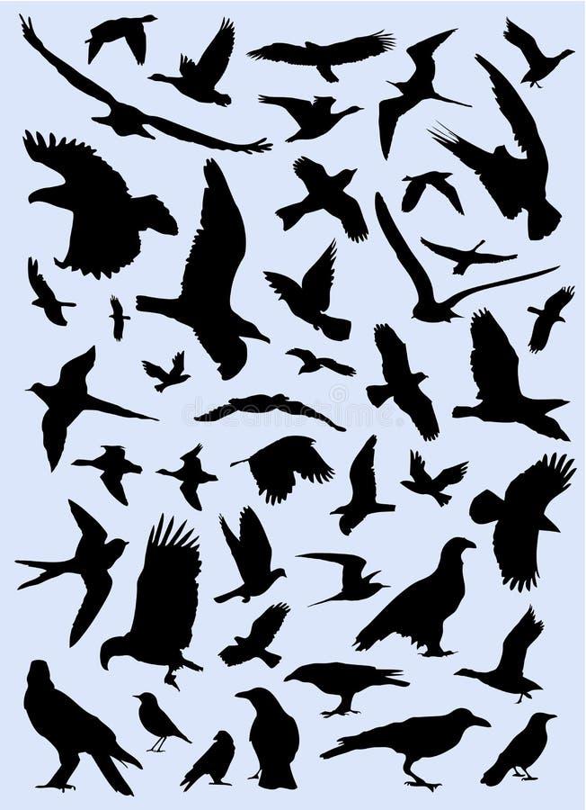 Coleção do vetor dos pássaros ilustração do vetor