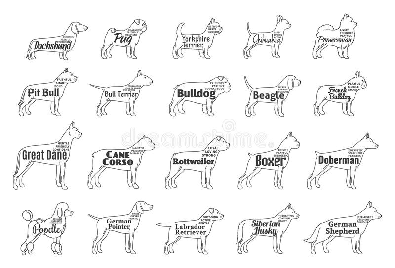 Coleção dos ícones do cão do vetor isolada no branco Nomes das raças dos cães ilustração royalty free