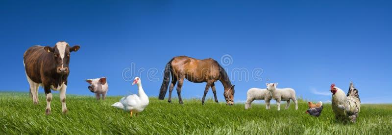 Coleção dos animais de exploração agrícola fotos de stock royalty free