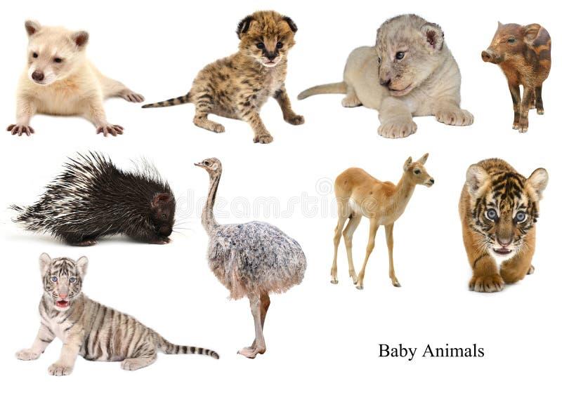 Coleção dos animais do bebê imagens de stock