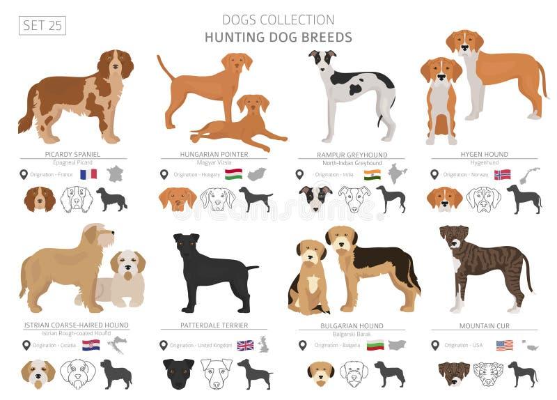 Coleção dos cães de caça isolada no branco Estilo liso Cor diferente e país de origem ilustração do vetor