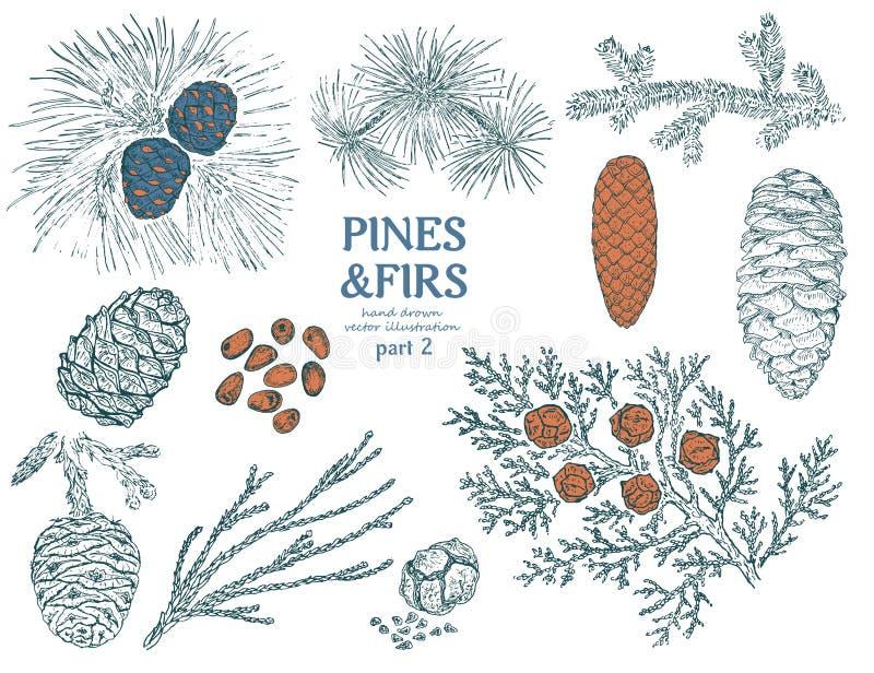 Coleção dos elementos dos abetos do esboço ilustração do vetor