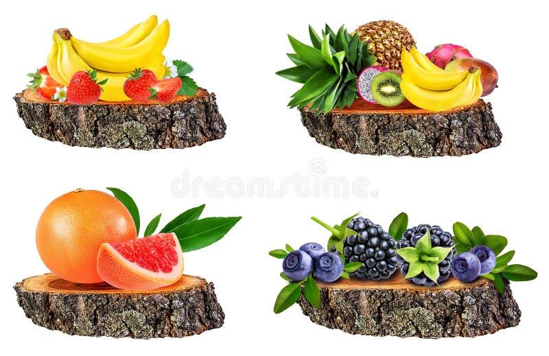 Coleção dos frutos isolados em um coto de árvore isolado no branco fotografia de stock