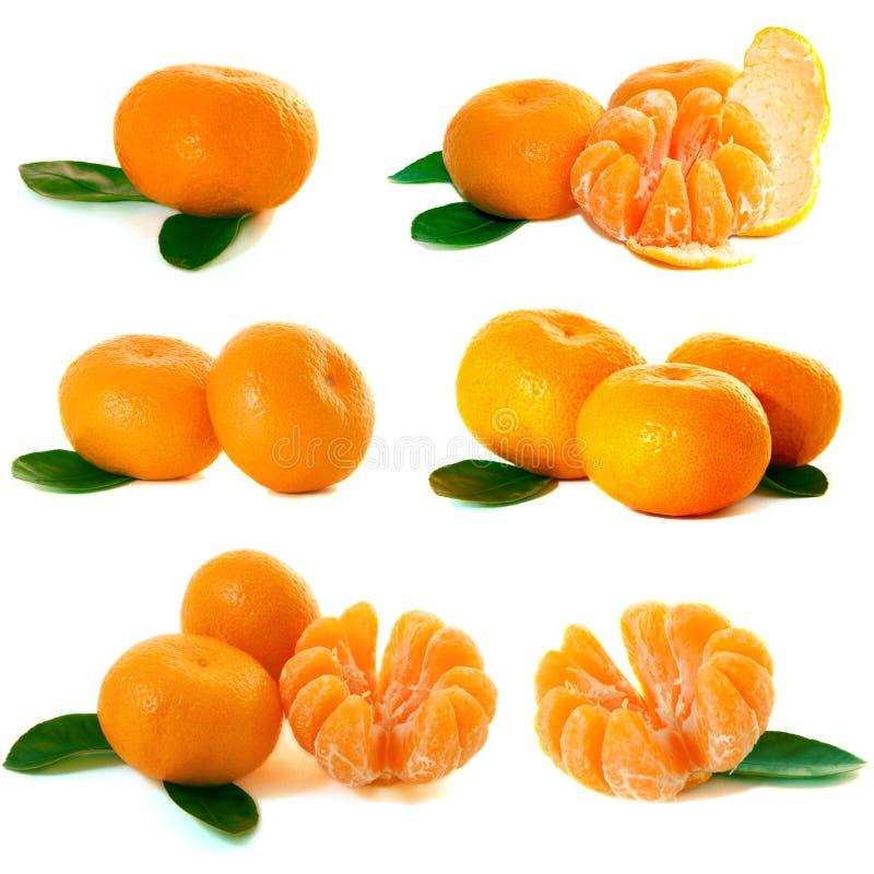 Coleção dos mandarino fotos de stock royalty free