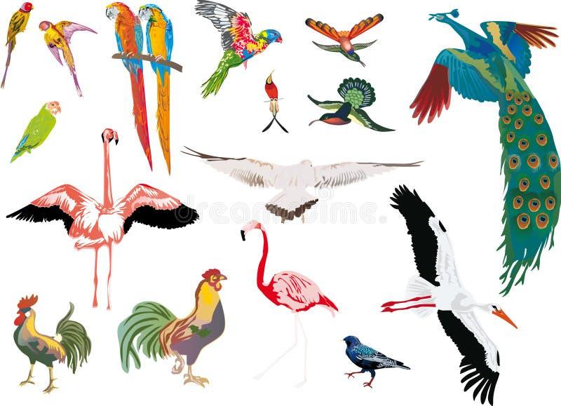 Coleção dos pássaros da cor no fundo branco ilustração do vetor