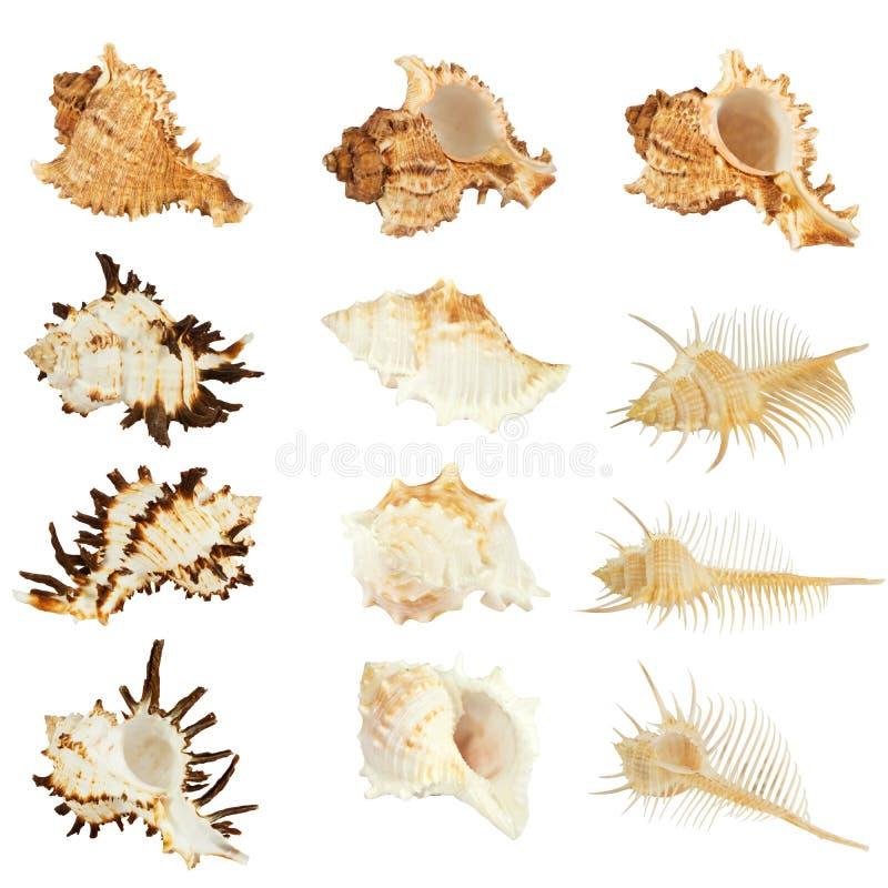 Coleção dos Seashells fotografia de stock