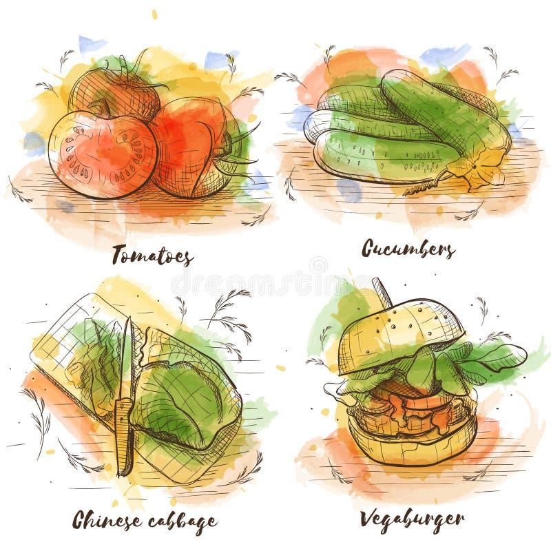 Coleção dos vegetais do esboço do watecolor do vetor Culinária saudável orgânica do alimento do vegetariano ilustração stock