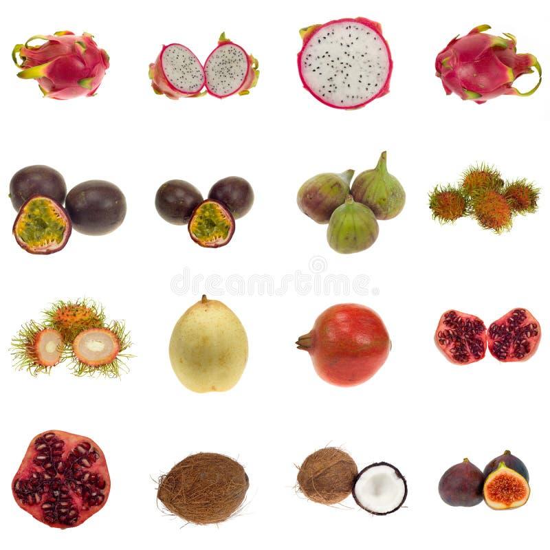 Coleção exótica da fruta imagens de stock