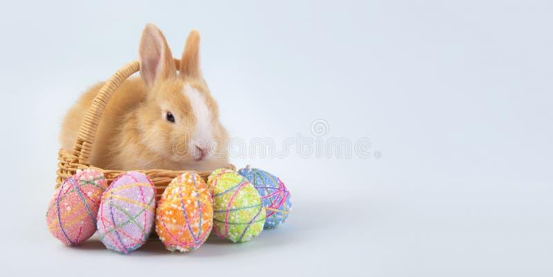 A coleção feliz dos ovos da páscoa, o coelho marrom bonito do coelho com cesta e os ovos pintam o fundo azul foto de stock