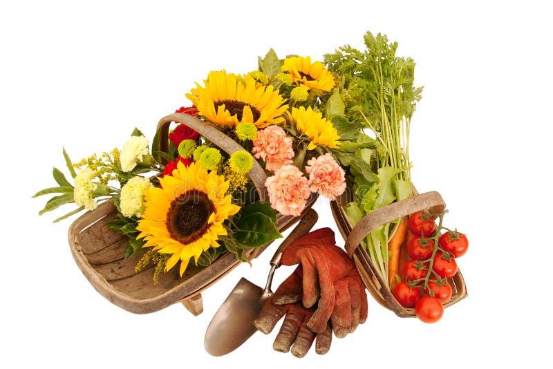 Coleção floral & vegetal fotografia de stock