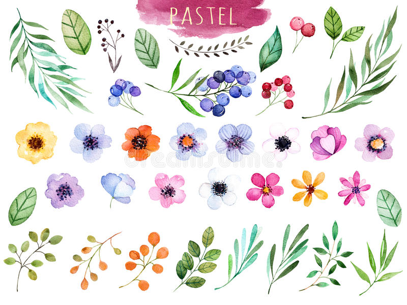 Coleção floral colorida com flores coloridos ilustração royalty free