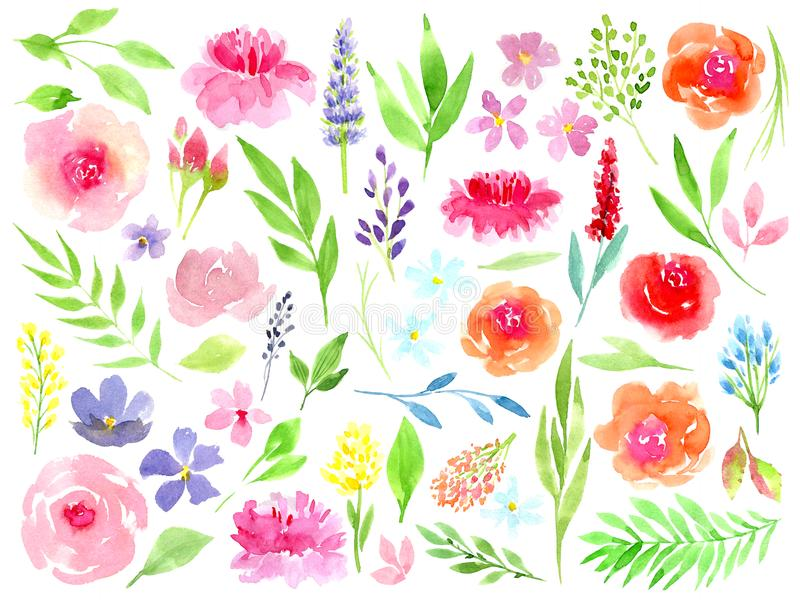 Coleção floral colorida com folhas e flores, aquarela de tiragem E ilustração stock