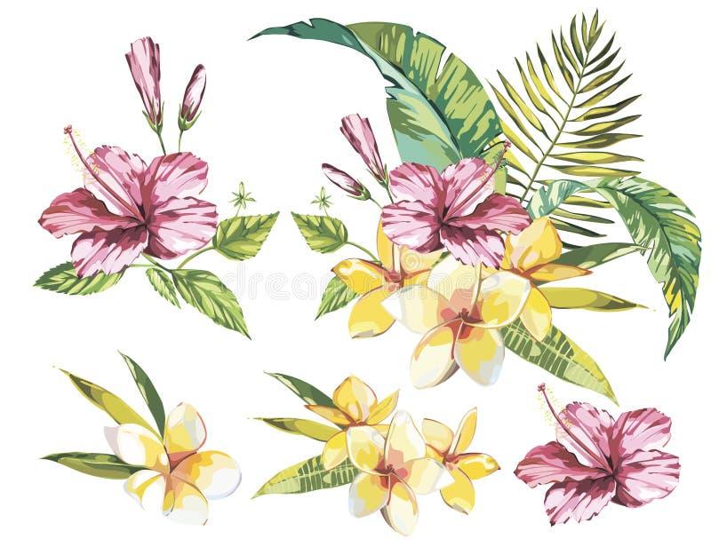 Coleção grande com elementos das plantas tropicais - folha da aquarela do grupo, flores ilustração royalty free