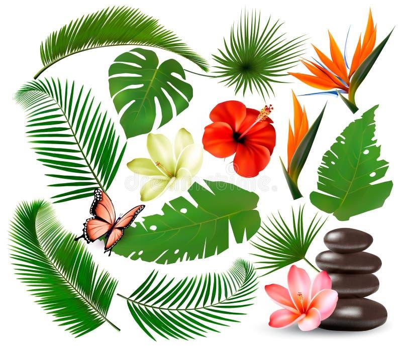 Coleção grande das folhas e planta tropical, flores e borboleta ilustração stock