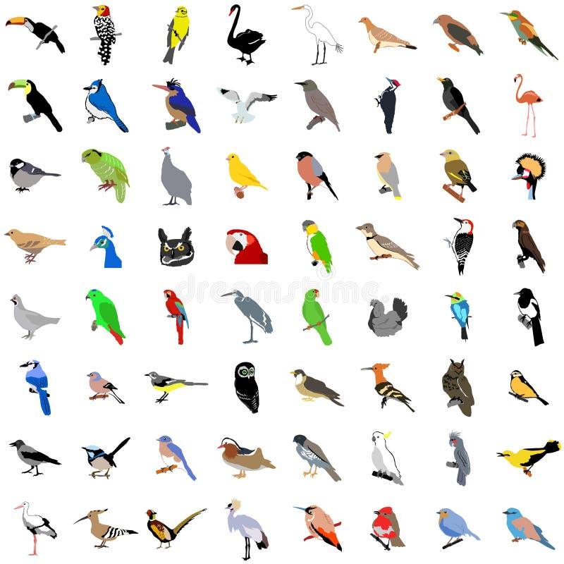 Coleção grande dos pássaros ilustração do vetor
