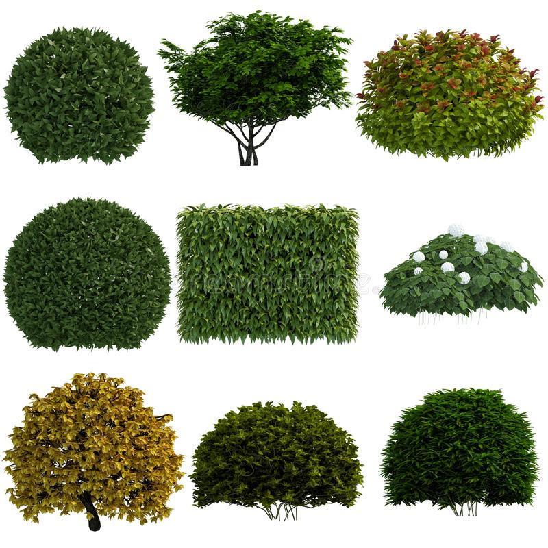 Coleção isolada planta fotos de stock