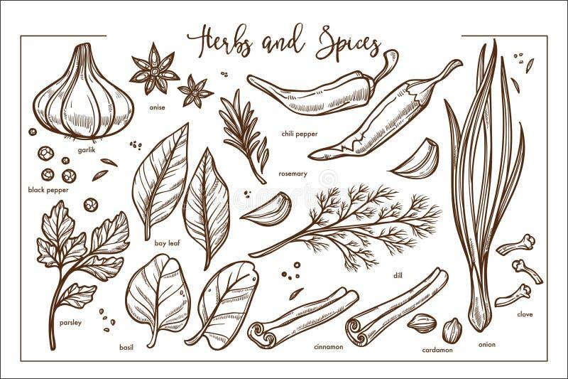 Coleção natural perfumada fresca do monochrome das ervas e das especiarias ilustração do vetor