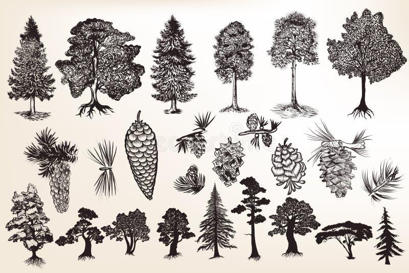 Coleção ou grupo de árvores tiradas mão no estilo gravado ilustração royalty free