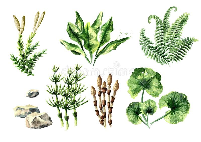 Coleção pré-histórica das plantas Ilustração tirada mão da aquarela, isolada no fundo branco ilustração stock