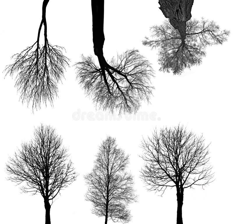 Coleção preta das silhuetas das árvores ilustração stock