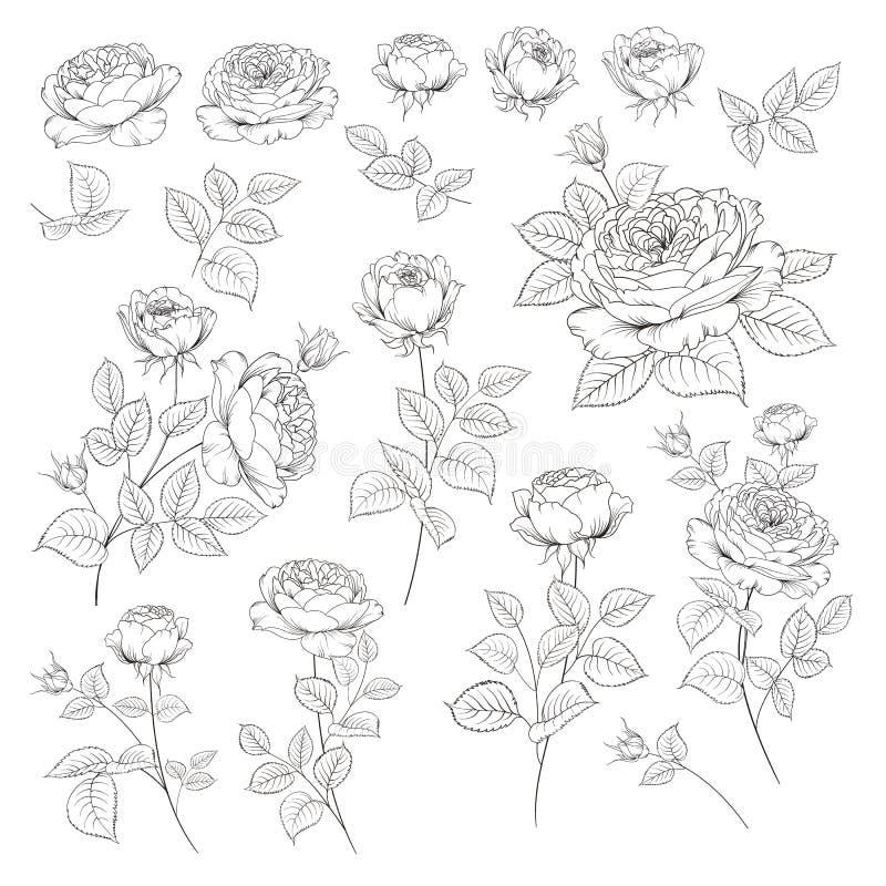 Coleção Rose Bud Elementos de rosas isoladas sobre fundo branco Bouquet de rosas Flor isolada em branco ilustração stock