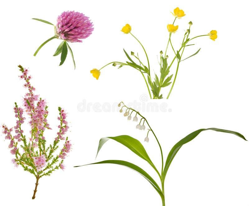 Coleção selvagem de quatro flores da floresta imagem de stock royalty free