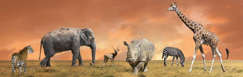 Coleção selvagem dos animais do savana imagens de stock royalty free