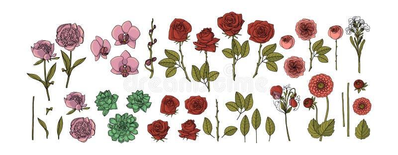 Coleção tirada mão das flores rosas, peônia, planta carnuda, orquídea, dália, elementos do design floral do vetor ilustração royalty free
