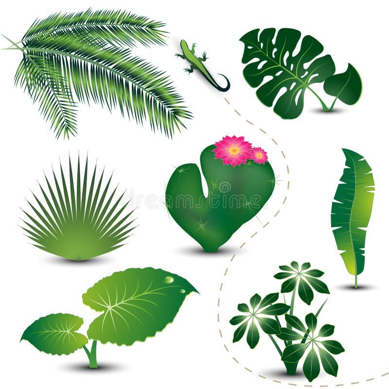 Coleção tropical das folhas ilustração stock