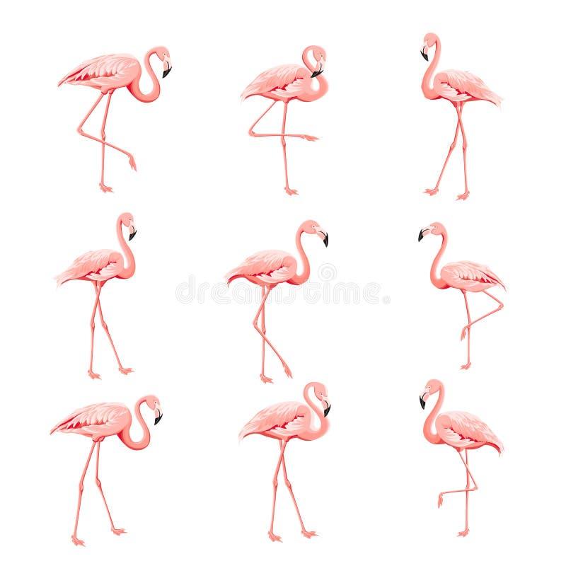 Coleção tropical dos pássaros Grupo cor-de-rosa dos flamingos Pacote da cópia do verão da forma Elementos para o cartão do convit ilustração stock